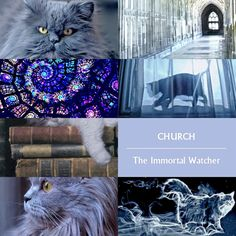 """matthewdaddariossmile: """" slayingreadingslumps: """" Felines of The Mortal Instruments - Church & Chairman Meow """" """"Church was doing what he often did when dropped - lying on his back with all four legs in..."""