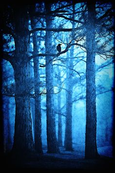 The Doorman - enchanted forest photography - trees forest woods blackbird blue - signed decorative print by slightclutter on Etsy Foto Nature, Forest Photography, Love Blue, Aqua Blue, Dark Forest, Blue Aesthetic, Lombok, Belle Photo, Shades Of Blue