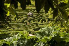 Glendurgan Garden in Falmouth Cornwall - Wander through this sub-tropical valley garden to a beach on the banks of the Helford River Falmouth England, Falmouth Cornwall, Cornwall England, Labyrinth Garden, Hedges, Maze, Devon, Perennials, Britain