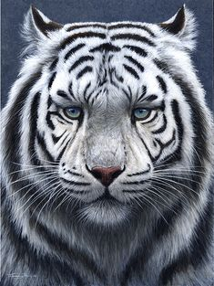Giclee Print: White Tiger Ghost by Jeremy Paul : Tiger Artwork, Tiger Painting, Watercolor Paintings, Beautiful Cats, Animals Beautiful, Cute Animals, Wild Animals, Baby Animals, Animal Paintings