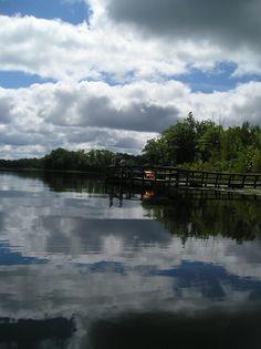 Rifle River Rec Area, Lupton Michigan