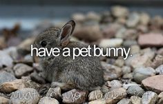 bucket list- have a pet bunny.