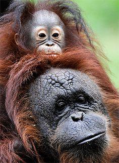 Aurora y su madre sustituta en el zoo de Houston
