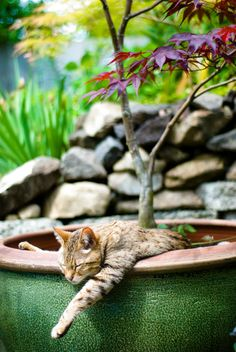 Who needs garden art when you have a cat?