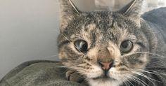 過剰染色体が原因で安楽死が決定した猫…その後の運命は?|ペットフィルム -犬・猫・ペットの画像・動画まとめ petfilm.biz