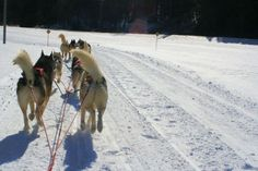 So while looking on Pinterest...I found a picture of my parents dogsledding rides! lol