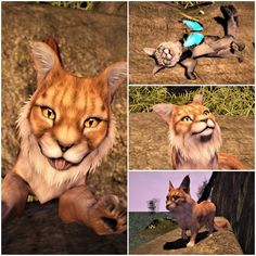 Part 3 - Astrids Nemeton Taxi, Panther, Landscapes, Rest, Play, Watch, World, Animals, Paisajes