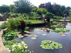 Oh the water lillies! Powell Gardens, MO