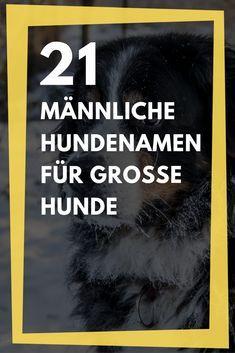21 Mannliche Hundenamen Fur Grosse Hunde Liste Mit Bedeutung
