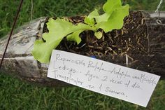 Adopt a Seedling. Guerilla gardening meets sustainability & recycling project.
