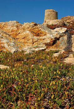Up to The Tower - L Ile-Rousse, Corsica, France Copyright: Nikki Francis Corsica, Cap Corse, Station Balnéaire, Lavender Fields, Paris Street, Provence, Monument Valley, Destinations, Invitation