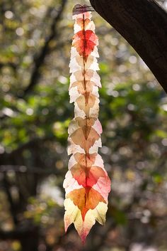 Boston Ivy Leaf Line | Flickr - Photo Sharing!