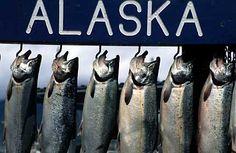 Go salmon fishing in Alaska