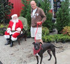 www.barnnursery.com  110213 Open House at The Barn Nursery We love cats & dogs at The Barn Nursery, Chattanooga, Tn # santa claus # dog at Christmas