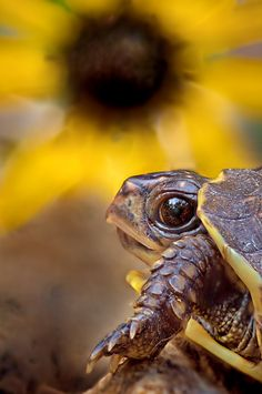 Who me! Eating the flowers? By: Robert Charity