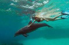 Bucket list - swim with dolphins