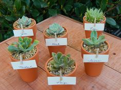 Succulent Bridal Shower Favor