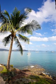 Taken from Coral Sea Resort Airlie Beach. Great morning for a walk around Airlie Beach Whitsundays. Camping Spots, Camping Life, Tent Camping, Australia House, Australia Travel, Brisbane, Sydney, Places To Travel, Places To Visit
