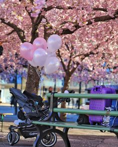 Kungsträdgården in Stockholm – Eat, Click, Travel and Repeat! Cherry Blossom Tree, Trees To Plant, Stockholm, Repeat, Outdoor Decor, Flowers, Plants, Travel, Viajes