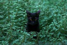 Γάτα σε ακάλυπτο της Προξένου Κορομηλά. (Μάιος 2018) Panther, Cats, Animals, Gatos, Animales, Animaux, Panthers, Animal, Cat