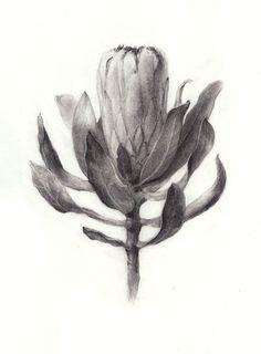 oliverscarlin:    Protea laurifolia ~Charcoal & graphite Botanical Drawings, Botanical Art, Botanical Illustration, Graphite Drawings, Art Drawings, Pencil Drawings, Protea Art, Black And White Illustration, Painting Inspiration
