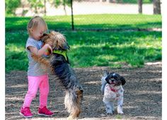 Puppy love | ThisWeek Community News
