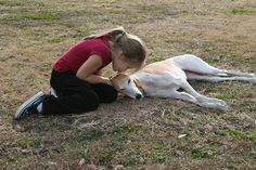 Greyhounds are Gentle