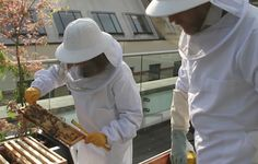 Why bees are thriving in our capital