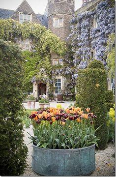 purple & orange tulips