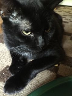 This is Blackie he turns 1 year old today. I brought him inside in Winter when he was still a stray cat http://ift.tt/2wlJmSV