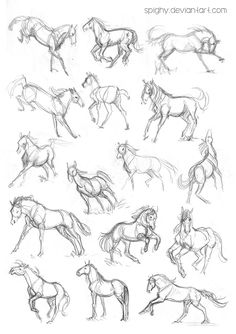 Horses quick sketches by Spighy