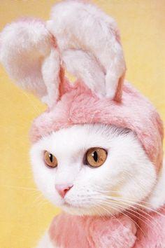 bunny-cat - Everyone likes dress up ;/