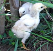 Whether it's a personal or business reason, 'Gifts That Matter' is the answer. Recipient gets to choose the gift without knowing the price. Chf, Baby Chicks, Ethiopia, Nest, Foundation, Eggs, Gifts, Animals, Nest Box