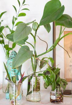 Espaço coletivo | Capítulo 2 | Histórias de Casa | Histórias de Casa Water Garden Plants, Indoor Water Garden, Hydroponic Gardening, Houseplants, Planting Flowers, Glass Vase, Sweet Home, Planters, Asmr