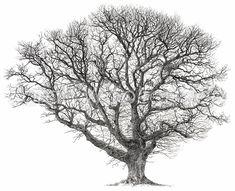 A1 Tree FINAL-2.jpg