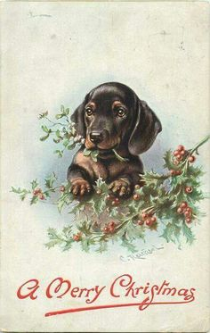 Image result for vintage beatrix dog in christmas stocking pin