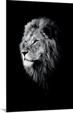 Dark Lion Close-up poster bestellen - PosterJunkie Image Lion, Lion Photography, Photography Ideas, Lion Love, Wolf Canvas, Lion Wallpaper, Lion Pictures, Pictures Images, Wall Art Prints