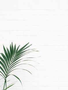 ideas for plants wallpaper interior Samsung Wallpapers, Cute Wallpapers, Phone Backgrounds, Wallpaper Backgrounds, Spring Backgrounds, I Phone 7 Wallpaper, White Wallpaper For Iphone, Girl Wallpaper, Magic Places