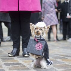 Off-the-catwalk style from the autumn/winter 2015 shows Uk Fashion, Paris Fashion, Street Chic, Street Style, Vogue Uk, Fall Winter, Autumn, Puppy Love, Cute Animals