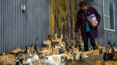 La residente y cuidadora de la isla Atsuko Ogata lleva una bolsa de comida al lugar designado para alimentar a los gatos