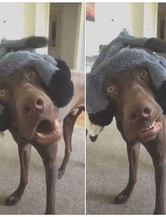 17 Animals Who Are 100% Done