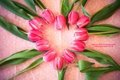 Pink Tulips in Heart Shape. Available as Wall Art (Canvas, Poster, Mounted Print, Acrylic, Aluminium and Gloss Print: http://thebellsistersart.com/shop/pink-tulips-in-heart-shape/
