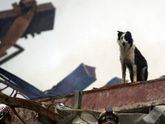 I'll never forget that In the wake of the 9/11 attacks, these amazing search and rescue dogs proved their bravery.