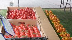 Fresh tomatoes from TJ Farms at Farmers Market at ASU Italian Beef Sandwiches, In Season Produce, Mini Pies, Creme Brulee, Farmers Market, Farms, Tomatoes, Healthy Recipes, Marketing