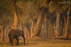 Fairy Tale Forests in Mana Pools, Zimbabwe.  Photographed by Alison Buttigieg