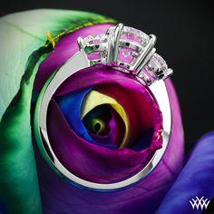 https://www.whiteflash.com/engagement-rings/three-stone/3-stone-trois-brillant-diamond-engagement-ring-1426.htm