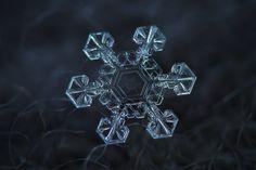 29 padrões fractais hipnotizantes encontrados na natureza 04