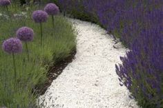 Zierlauch + Lavendel