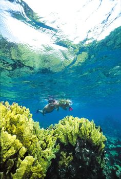 Northern Caribbean Sea - A Divers Paradise Caribbean Sea, Caribbean Cruise, Caneel Bay Resort, Virgin Islands National Park, Historical Sites, Hiking Trails, Snorkeling, Scuba Diving, Beautiful Beaches