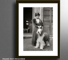 1915 Old English Sheepdog